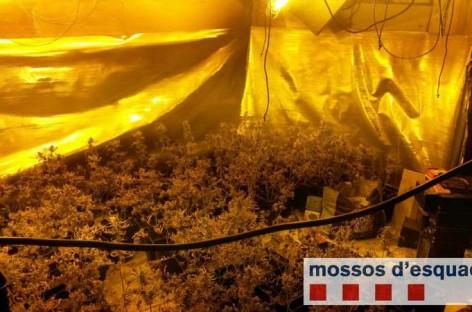 Un vecino de Montmeló y otro de Sant Fost detenidos por cultivo de marihuana