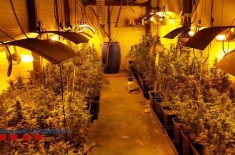 Tres vecinos de la Garriga detenidos en relación a una plantación ilegal de marihuana