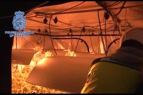 La Policía Nacional desarticula un clan familiar de cultivo de marihuana que operaba en Sant Fost