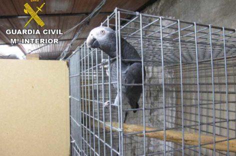 El Seprona localiza un vivero ilegal de aves en Bigues i Riells