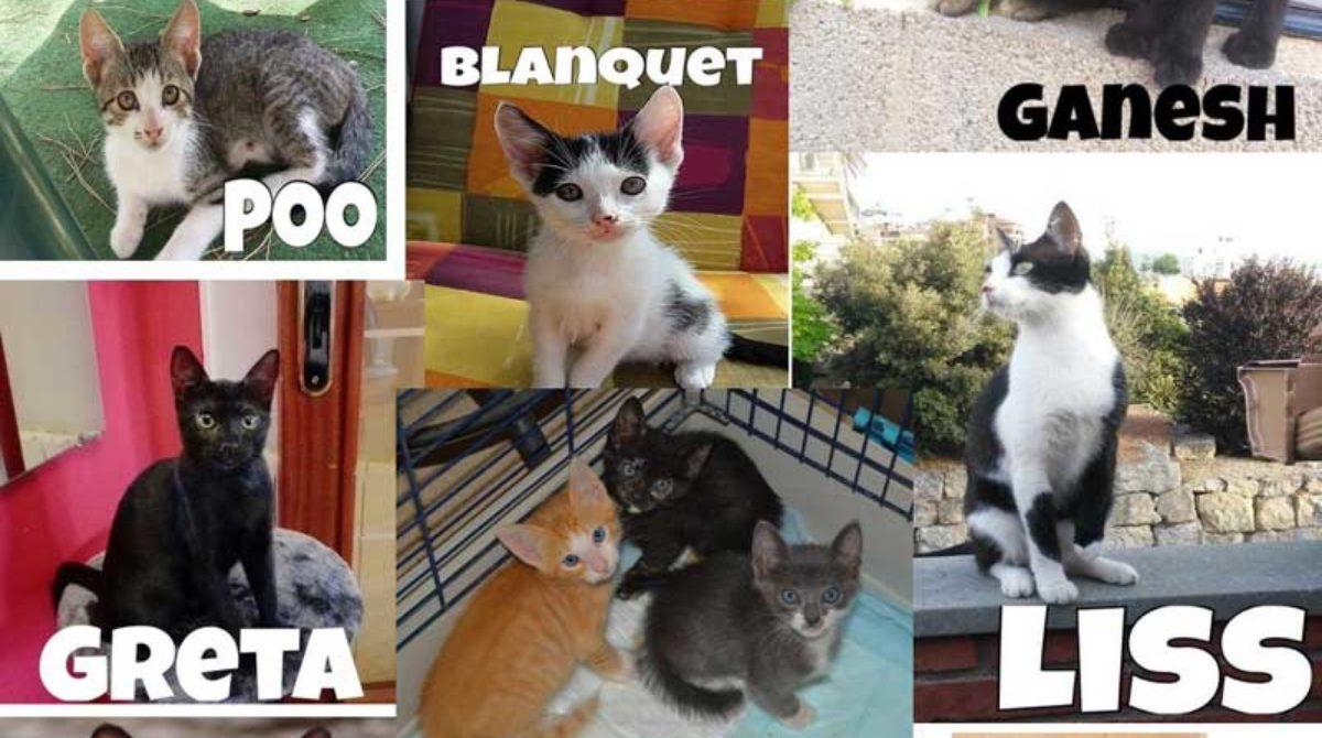Molts gats pendents d'adopció a l'Ametlla