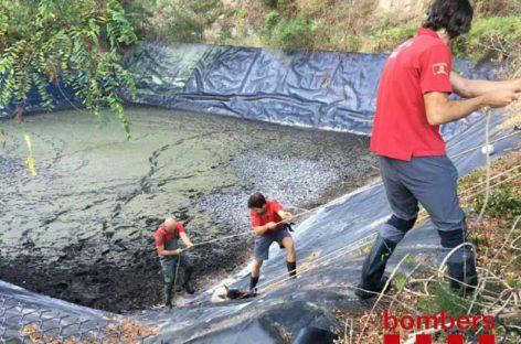 Los bomberos rescatan en Llinars un corzo que había caído a una balsa