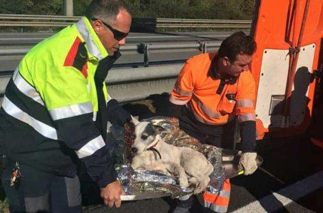Los Mossos ponen en marcha un operativo para rescatar a un perro perdido en la Roca