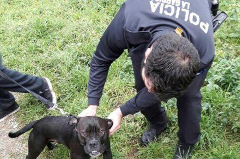 La policía de la Garriga rescata un perro que estaba a punto de ahogarse en el Congost