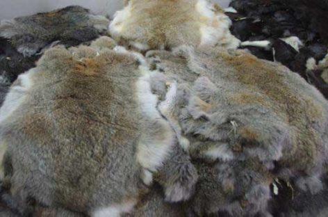 Un empresario de Cardedeu condenado a dos años y medio de prisión por apropiarse de 200.000 pieles de conejo