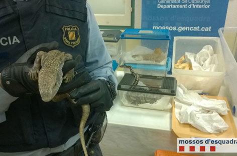 Denunciado un joven por tener 24 reptiles en casa, la mayoría serpientes exóticas, sin permiso
