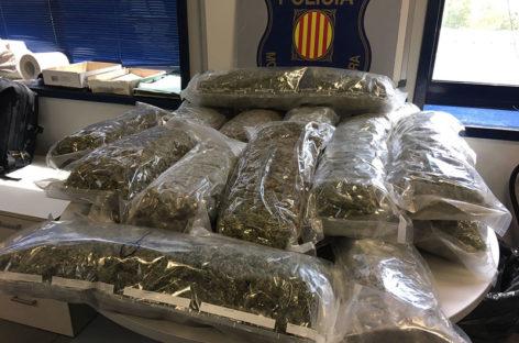 Decomisan a un vecino de la Garriga 126.000 euros en marihuana que cultivaba en su casa de l'Ametlla