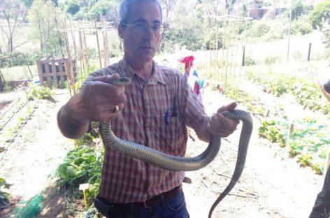Capturan una serpiente venenosa en los huertos de una escuela de Granollers