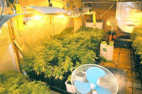 Tres detenidos en Vallgorguina por cultivo ilegal de marihuana