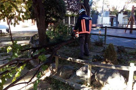 El fuerte viento provoca la rotura de áboles y corta carreteras y calles en Cardedeu y La Garriga