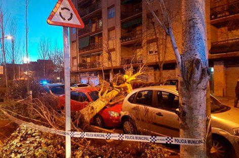 Un coche estacionado resulta dañado al caerle un árbol encima en Mollet
