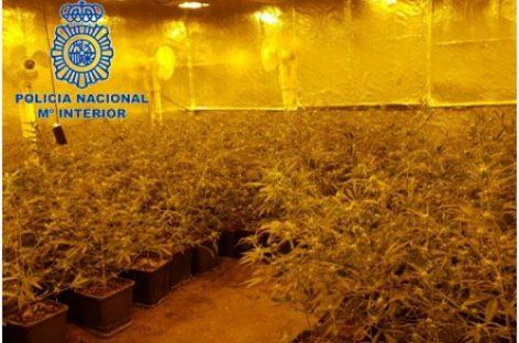 Cae una red de tráfico internacional de marihuana que operaba en Vallgorguina