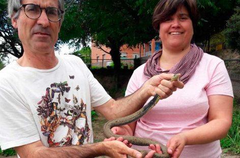 Capturan una serpiente en una escuela de primaria e infantil de Granollers