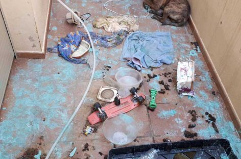 Denuncia contra un vecino de la Garriga por dejar abandonado su perro en una terraza sin agua ni comida