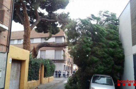 Un árbol de grandes dimensiones se desploma en Mollet sobre dos coches y una casa