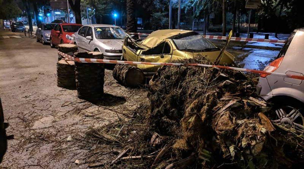 Una palmera se desploma sobre un coche en Mollet a causa de la tormenta
