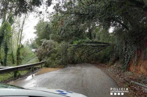 Problemas de tráfico por la caída de árboles en Granollers y Les Franqueses