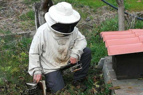 La Garriga instala la primera colmena de abejas municipal de la comarca