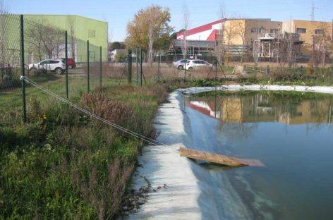 Granollers instala rampas en todas las balsas para ayudar a las ranas a salir del agua