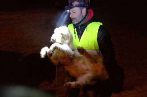 Espectacular rescate de una perrita que llevaba cuatro días atrapada en un pozo de Vilanova del Vallès