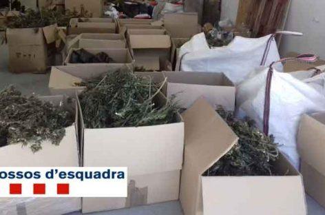 Localizan 264 kilos de marihuana en una nave de Sant Celoni