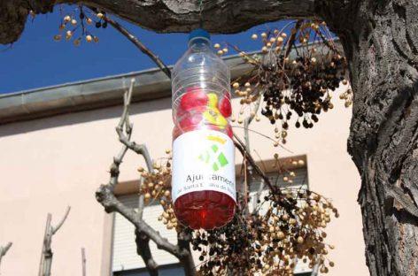 Santa Eulàlia coloca trampas para impedir que la avispa asiática se instale en el municipio
