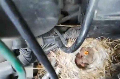 Un transportista de la Llagosta localiza un nido en el motor de su furgoneta